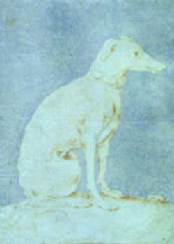 Levriero, Parmigianino