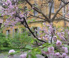Orto botanico - Scuola in fiore