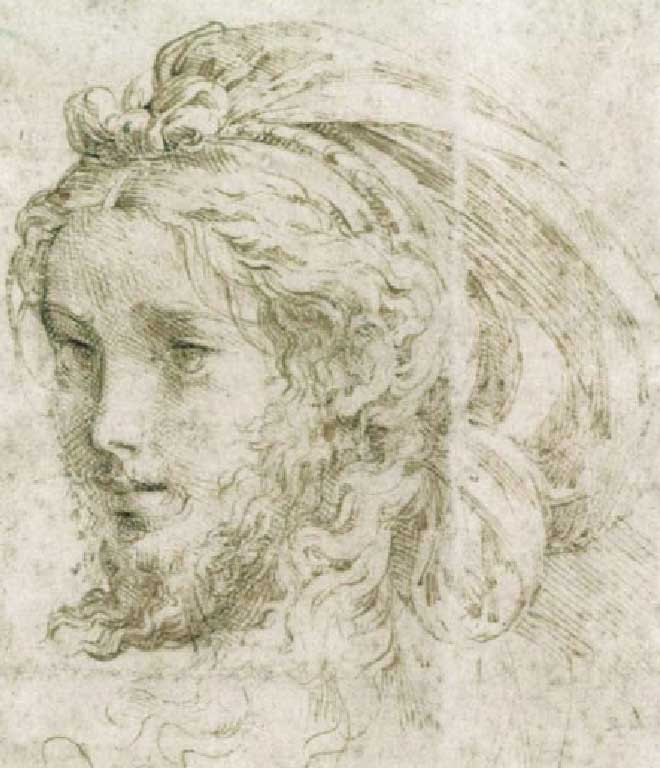 Testa di Giovane, Parmigianino