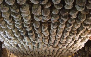 Polesine, culatelli (Foto: Meridiana Immagini)