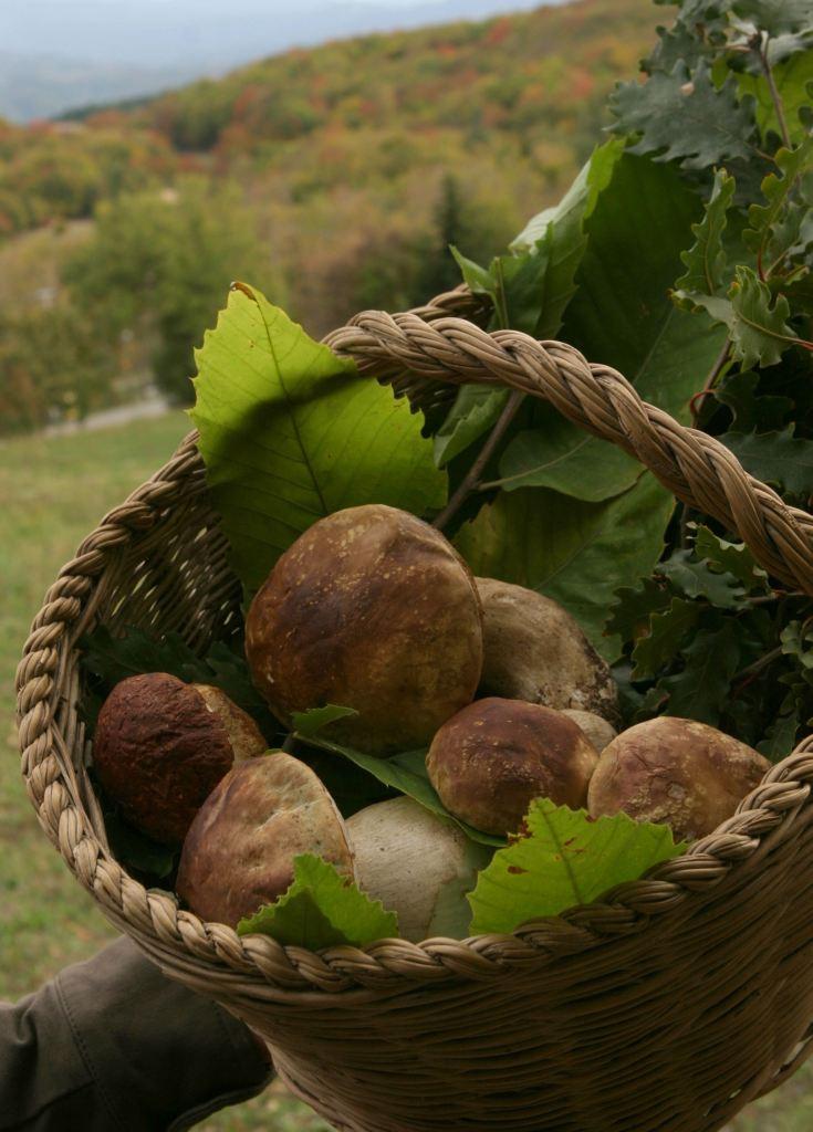 Funghi Porcini dell'Appennino parmense (Foto: Meridiana Immagini)
