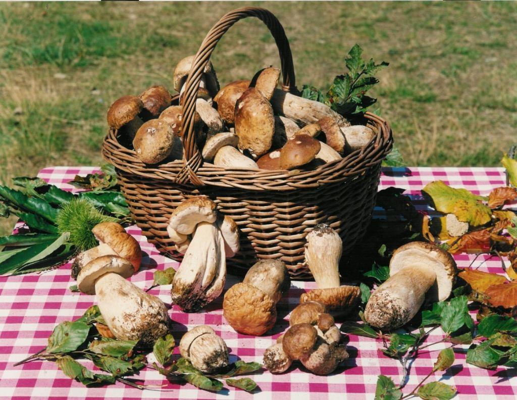 Funghi Porcini di Borgotaro