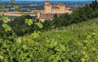 Vigneti sui colli intorno al Castello di Torrechiara